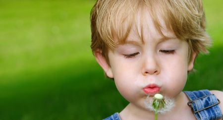 a young boy blows on a dandelion flower  photo