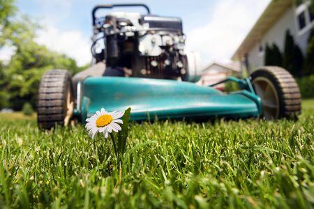 풀밭에서 꽃을 자르려고하는 잔디 깎는 기계의 닫습니다