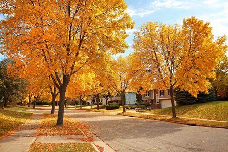 calle residencial en otoño con los colores oro y caer hojas Foto de archivo