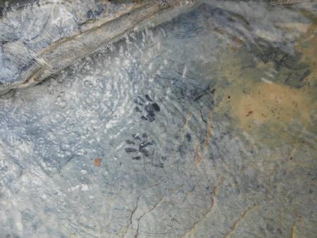 silt: Animal tracks in a stream