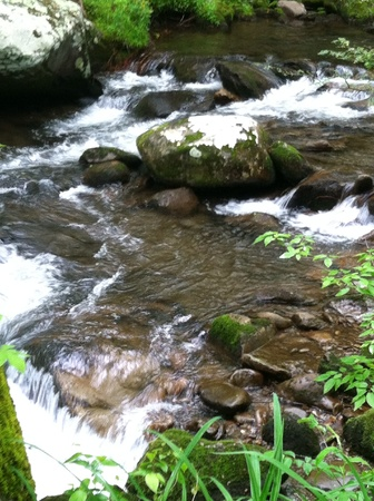 Whitewater stream in the Smoky Mountains National Park Banco de Imagens