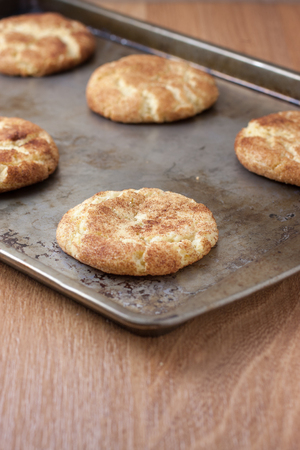 cookie sheet: Snicker Doodle cookies on a cookie sheet, sitting on a counter.