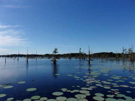Daytime on the bayou 12 Stock Photo