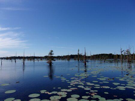 Daytime on the bayou 11 Stock Photo