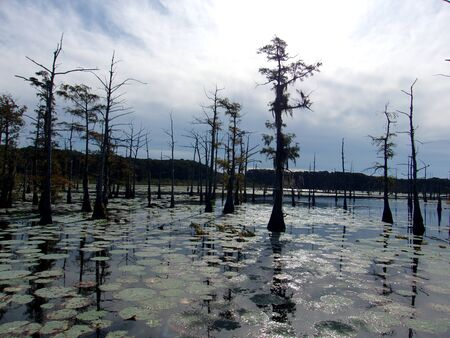 Daytime on the bayou 24