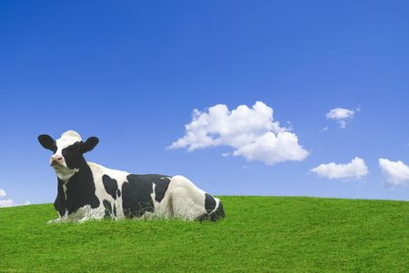 Black and white cow laid down in a green meadow against a blue sky. photo