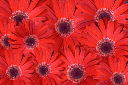 Red background composed with flowers. photo