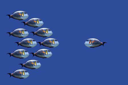 すべてに対して熱帯魚のイラスト