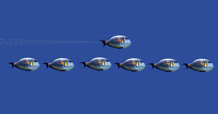 hurried: Illustration of tropical fishes on concept :  speed up the process Stock Photo