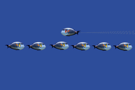 3D Illustration of tropical fishes on concept : don't always follow the rules