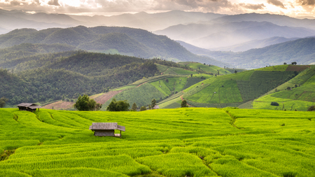Green Terraced Rice Field in Pa Pong Pieng, Mae Chaem, Chiang Mai, Thailand Stockfoto
