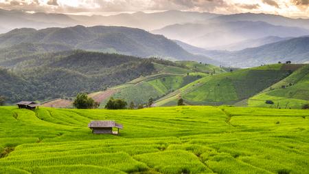 Verde Campo colgante del arroz en Pa Pong Pieng, Mae Chaem, Chiang Mai, Tailandia Foto de archivo