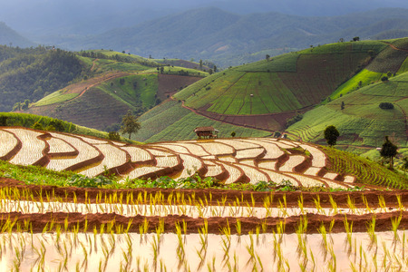 terraced field: Green Terraced Rice Field in Pa Pong Pieng , Mae Chaem, Chiang Mai, Thailand