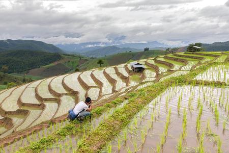 Asian man take a photo green terraced rice field in Pa Pong Pieng , Mae Chaem, Chiang Mai, Thailand