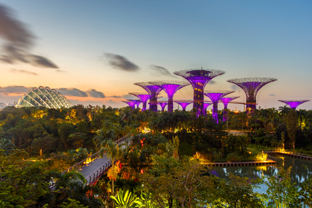 hectares: SINGAPORE-JUNE 28,2015: Night view of The Super Tree Grove at Gardens by the Bay in Singapore. Spanning 101 hectares, and five-minute walk from Bayfront MRT Station.