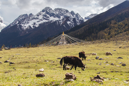 four peaks wilderness: Four girls mountain is situated in Xiaojin county in the northwest of sichuan province, China