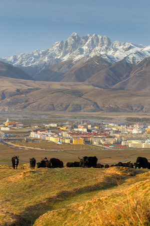 atmospheric pressure: Yak herds feeding in the morning grass and village inclose mountain a famous landmark in Ganzi, Sichuan, China.