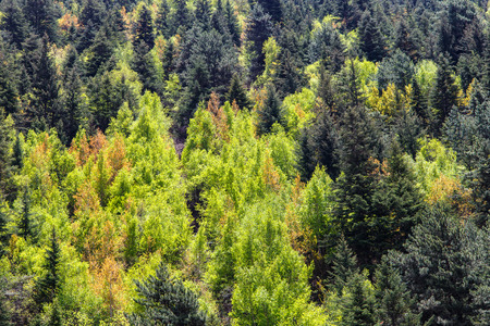 mountainside: View of forrest of green pine trees on mountainside Stock Photo