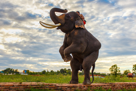 Elephants and old stupa at ayutthaya province in Thailand Standard-Bild