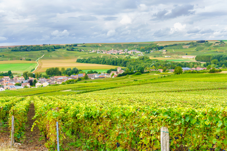 wine road: Champagne Vineyards at sunset, Montagne de Reims, France Stock Photo