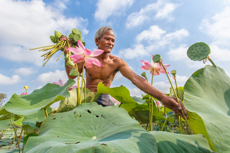 Old man thai farmer grow lotus in the season. They were soaked with water and mud to be prepared for harvest to sell with blue sky background Stock Photo