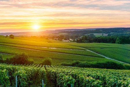 サンセット モンターニュ ・ ド ・ ランス、フランスのシャンパンのブドウ畑