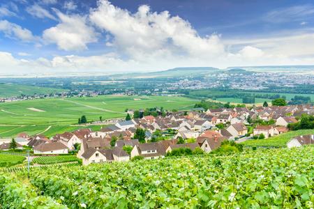Szenische Landschaft in der Champagne, Weinberge in der Montagne de Reims, Frankreich Standard-Bild - 81602138