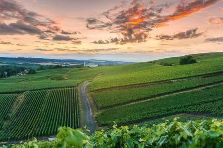Champagne Vineyards at sunset Montagne de Reims, France
