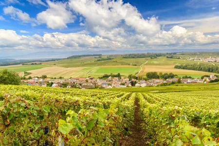 Scenic landscape in the Champagne, Vineyards in the Montagne de Reims, France