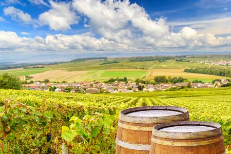 Vinhedos de champanhe com barril de madeira velho na videira verde da videira em vinhedos de champanhe fundo na montanha de Reims, França Foto de archivo - 88470705