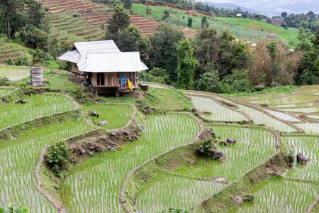 Green Terraced Rice Field in Pa Pong Pieng, Mae Chaem, Chiang Mai, Thailand Imagens