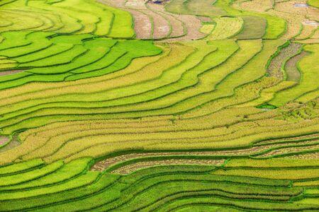 Green terraced rice fields in rainny season at Mu Cang Chai, Vietnam 스톡 콘텐츠