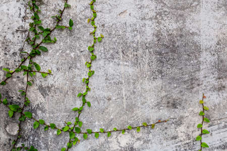 Green plant on grunge concrete wall texture background.