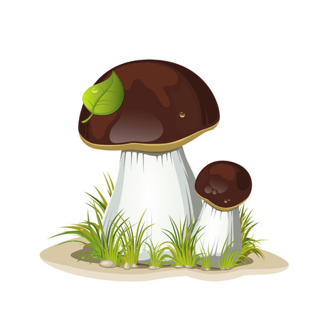 boletus: Two ceps isolated on a white  Illustration