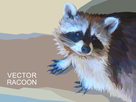 racoon: Vector racoon made of polygons. Background with dangerous wild beast. Amazing photorealistic poster with coon. Vector illustration eps 10.