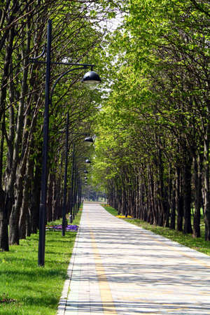 Park avenue of a city botanical garden, vacation spot of city dwellers in holidays