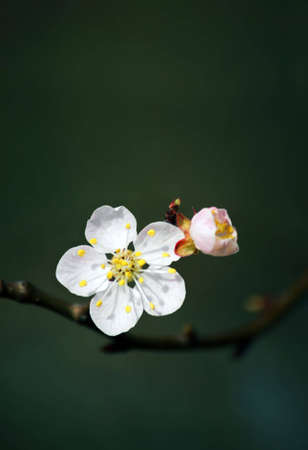 Flower on a branch of a tree in a spring wood
