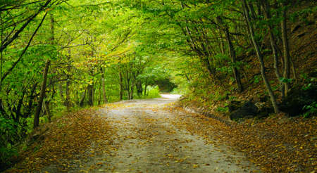 deciduous: Mountain road in the forest of the North Caucasus