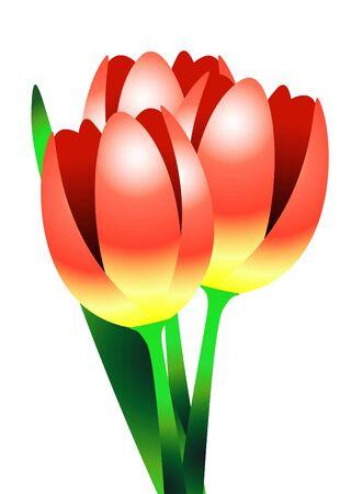 three tulips illustration