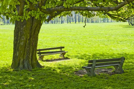 bench in a public park