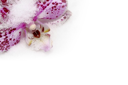close up of purple orchid on show background photo