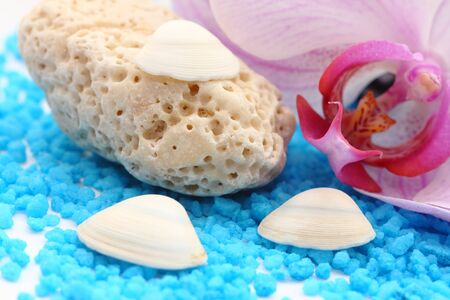 holey: close up of white coral holey stone with orchid and blue salt