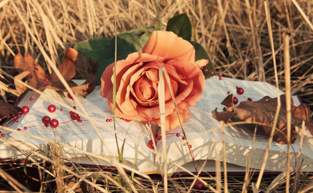 open book with rose in the dry grass in autumn photo