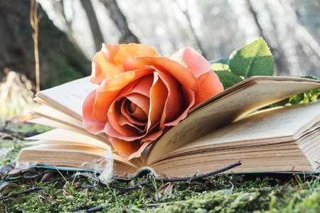 open book with rose on the moss in the forest photo