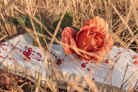 love theme - open book with rose in the dry grass in autumn photo