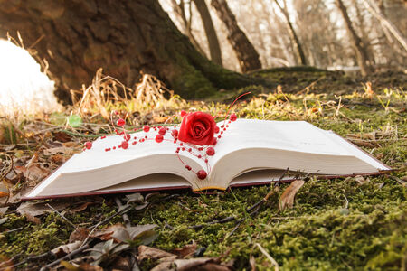 love theme - open book with rose on the moss in the forest in sunset photo