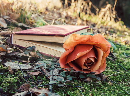 love theme - closed book with rose on the moss in the forest at sunset photo