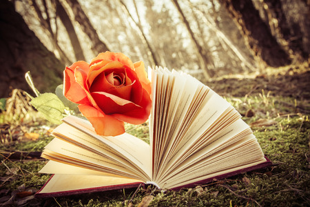 vintage effect, romantic theme - open book with rose on the moss in the forest photo