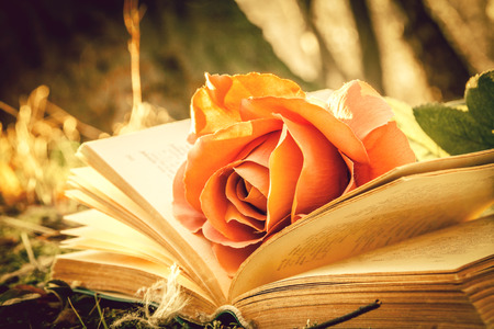 open book with rose in the forest - vintage effect