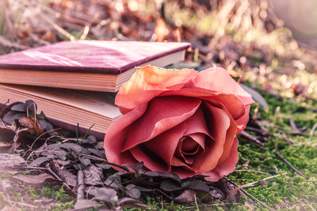 sweet love theme with color effect - closed book with rose on the moss in the forest at sunset photo